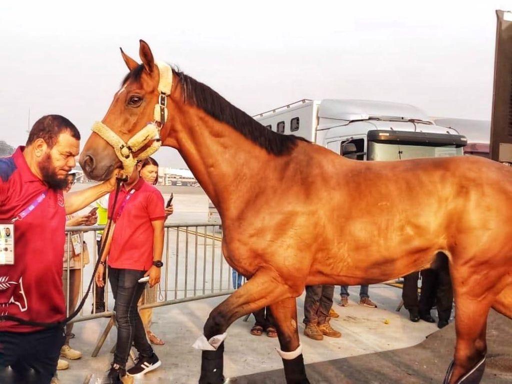 Tiba di Jakarta, Kuda Asian Games Dikawal Ketat Hingga Area Pacuan