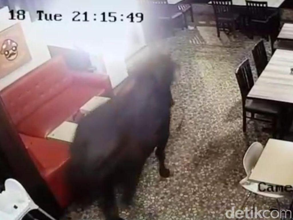 Sapi Ini Mampir Dulu ke Kafe, Sebelum Dikurbankan Kemudian