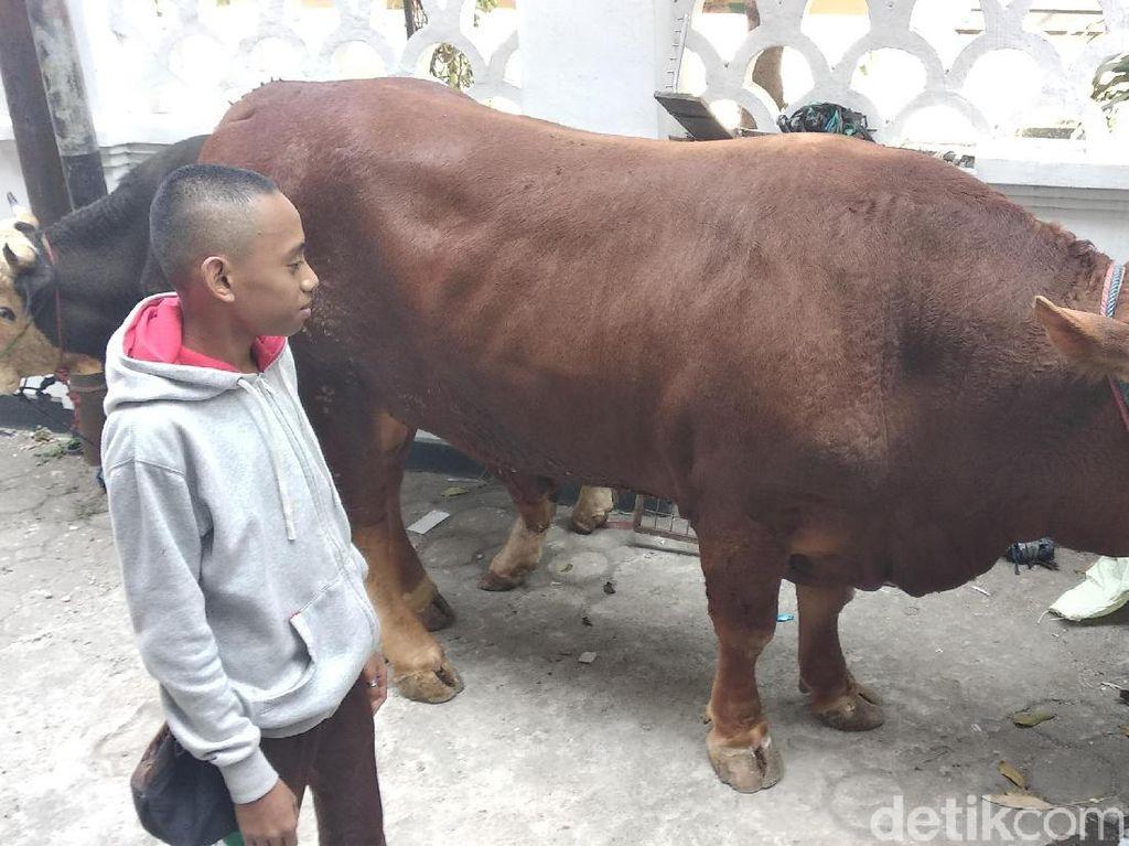 Jokowi Kurban Sapi 850 Kilogram di Masjid Raya Bandung