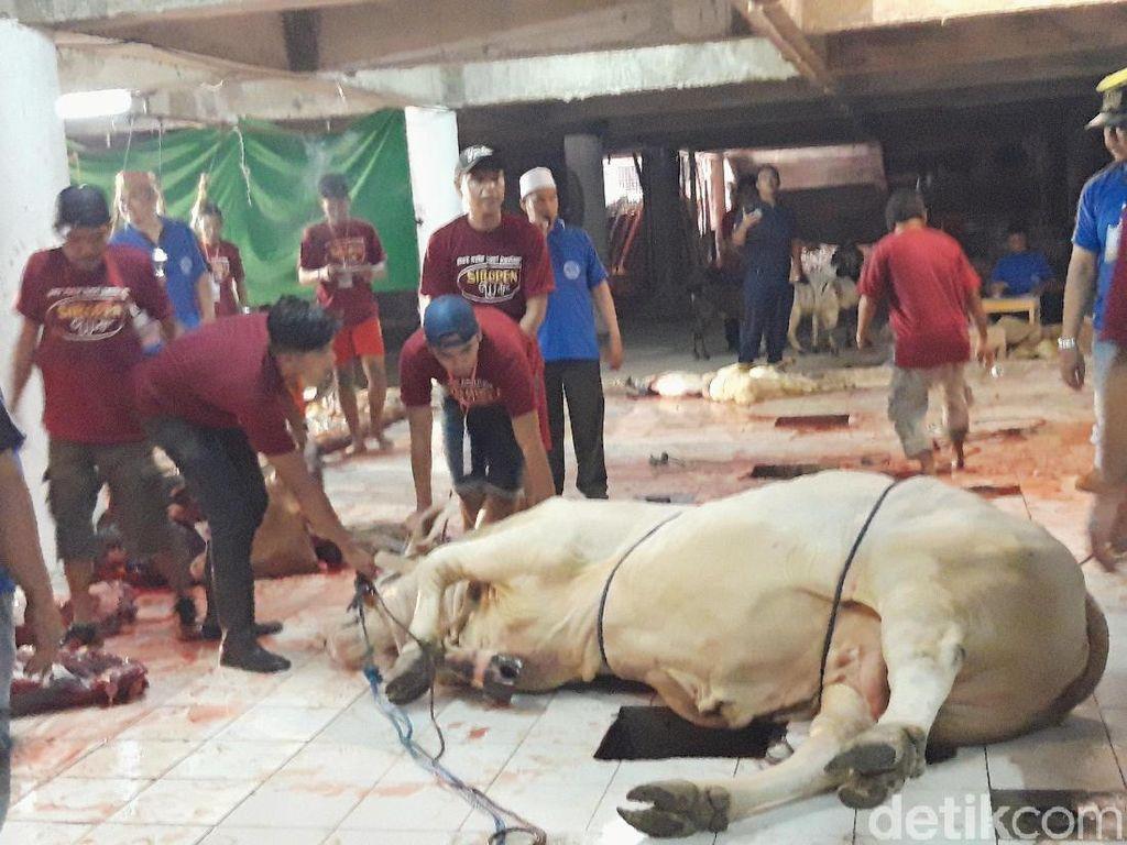 Sapi Kurban Jokowi di Surabaya Baru Disembelih Hari ini, Mengapa?