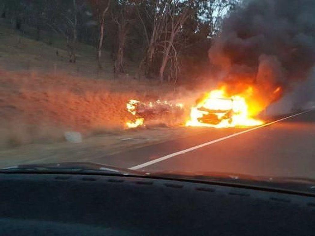 Mobil Terbakar Hebat di NSW Setelah Menabrak Kanguru