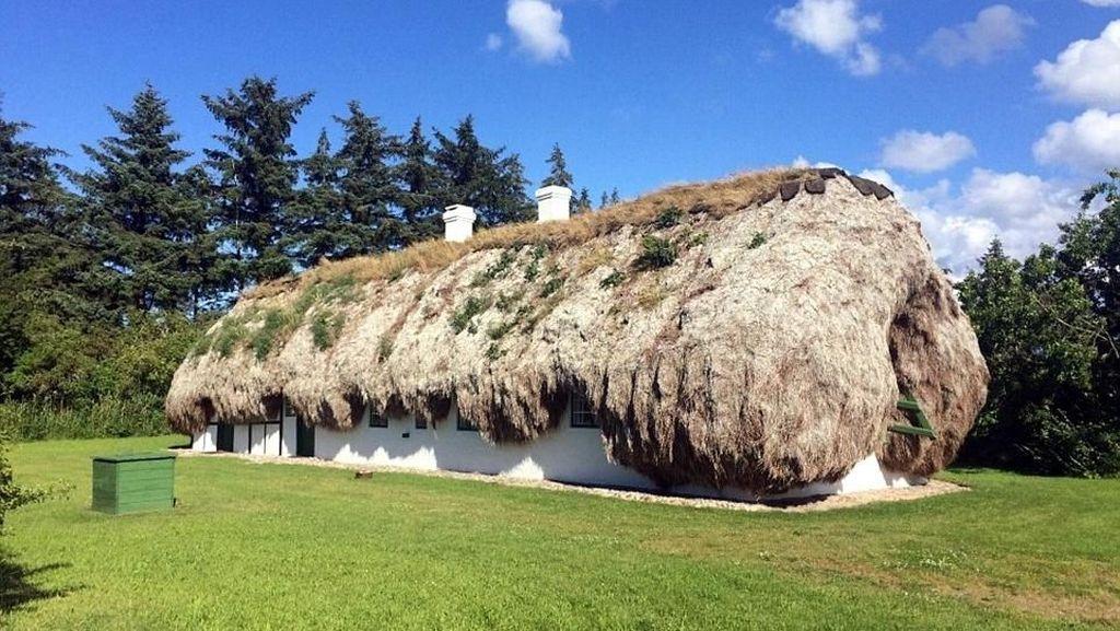 Foto: Rumah Rumput Laut dari Denmark