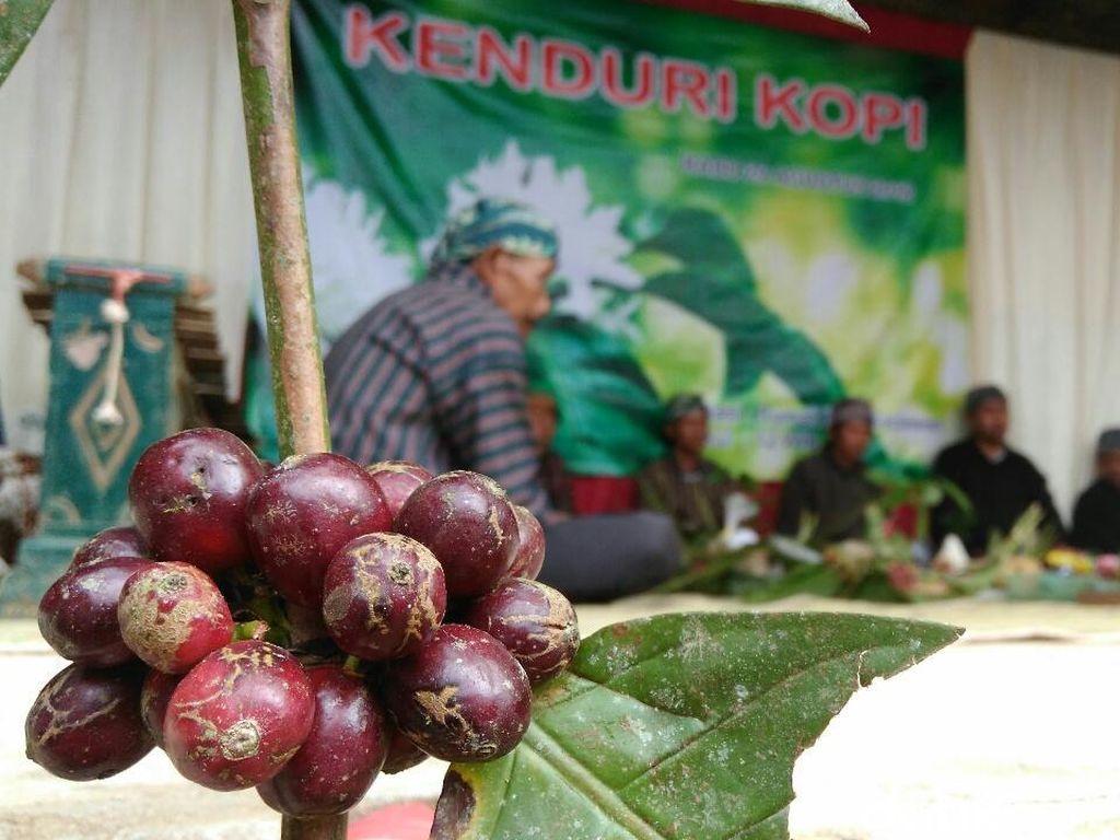 Petani Purworejo Syukuran Panen Kopi dengan Gelar Kenduri Kopi