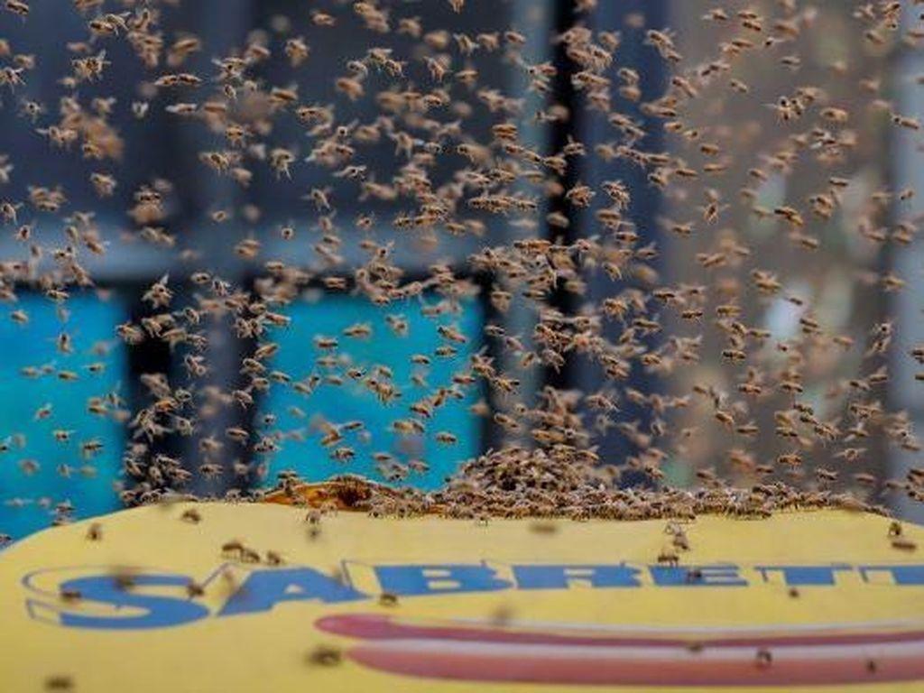 Belasan Ribu Lebah Hinggapi Tenda Hot Dog di Times Square New York