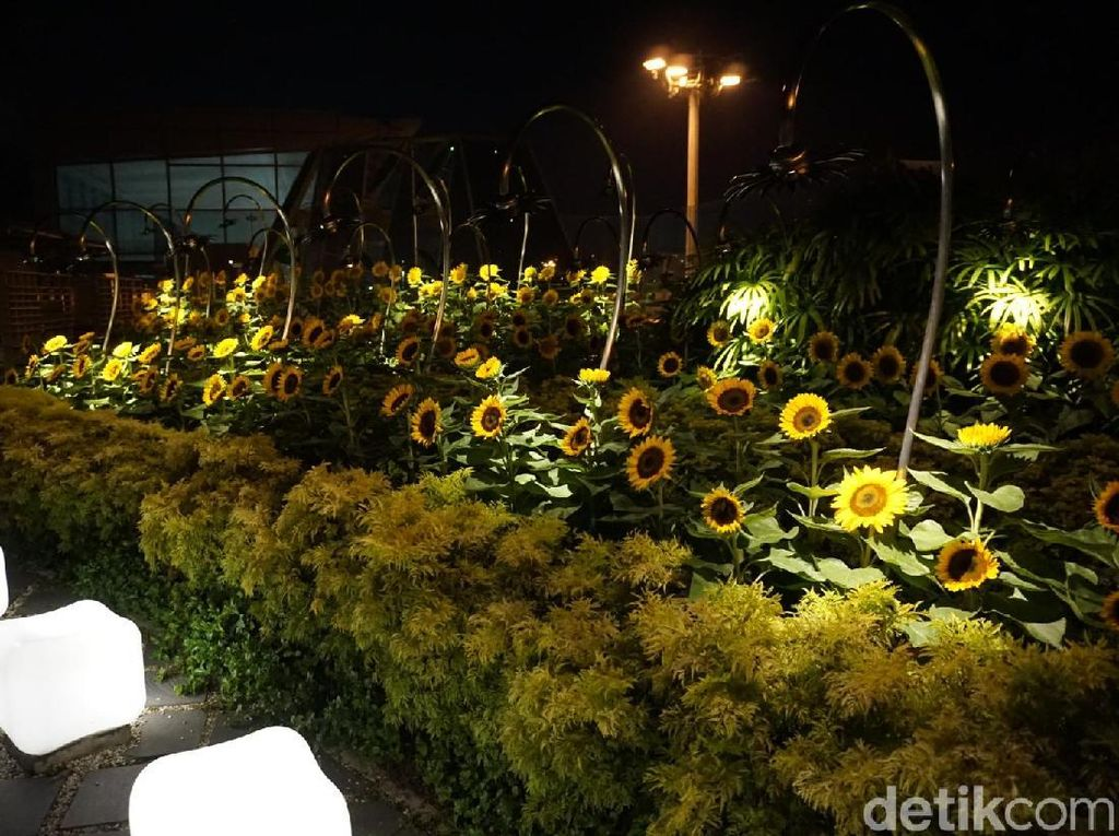 Foto: Bandara yang Punya Taman Bunga Matahari