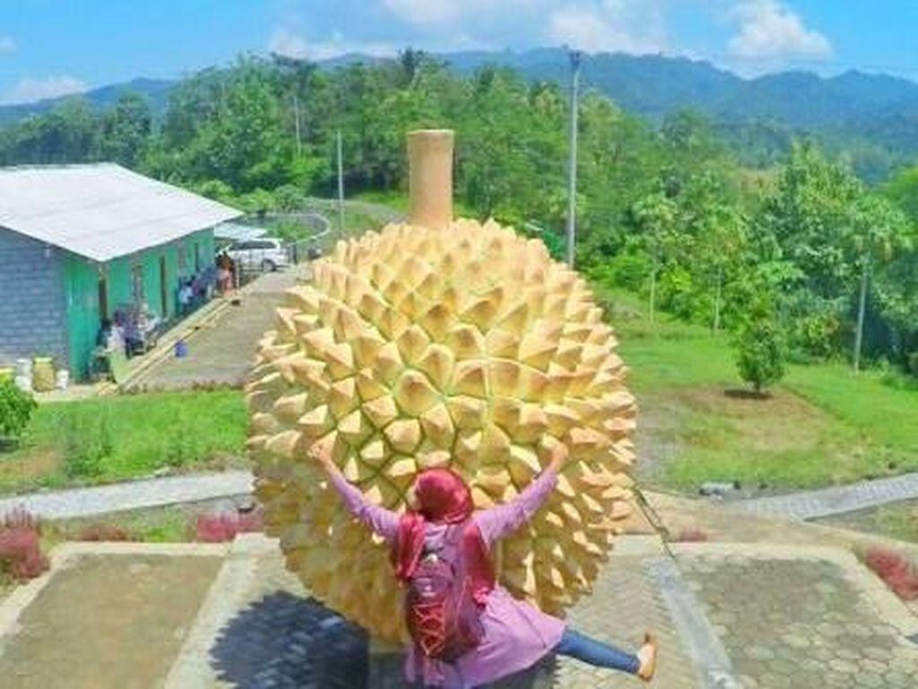 Durian Raksasa di Kulonprogo