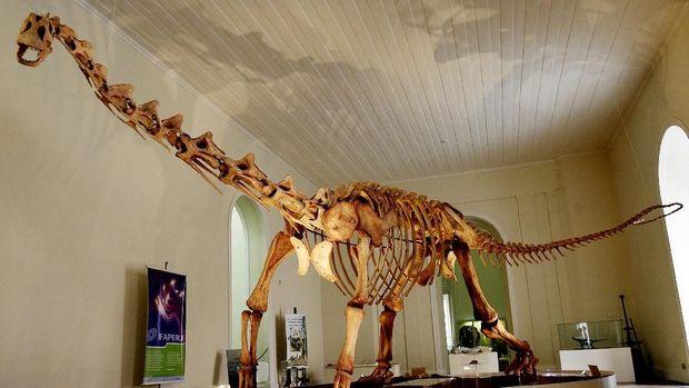 Salah satu koleksi Museum Nasional Brasil, replika tulang Maxakalisaurus.