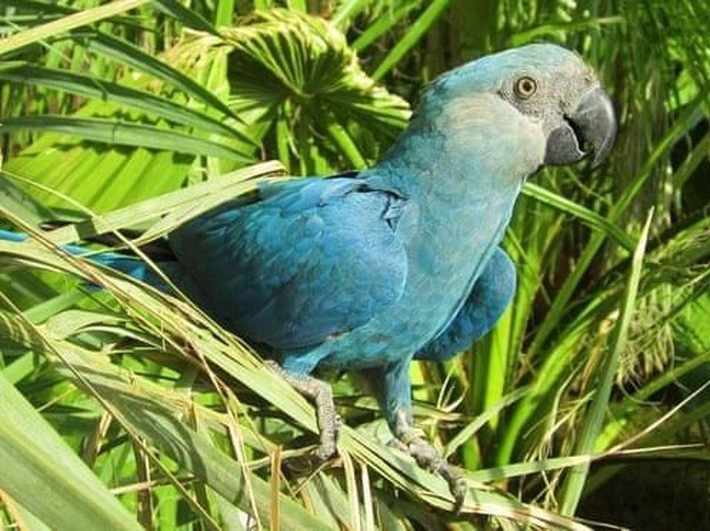 Penyelundupan Burung Hampir Punah Terungkap di Chili