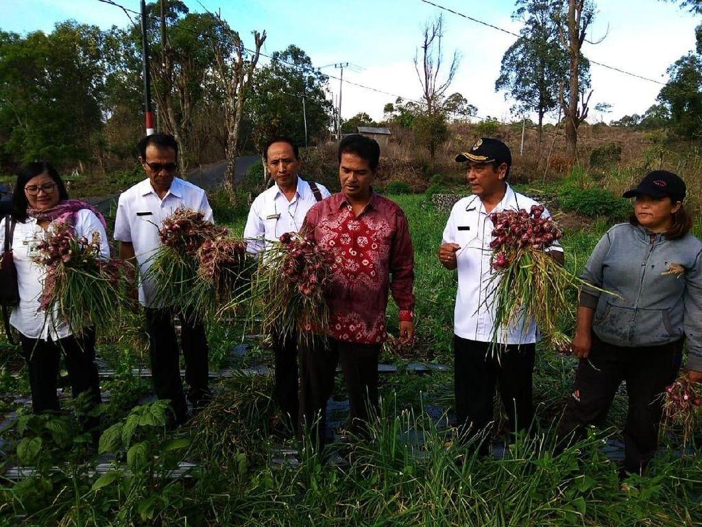 Kabupaten BangliDinilai Sukses Jadi Pemasok Bawang Merah di Bali
