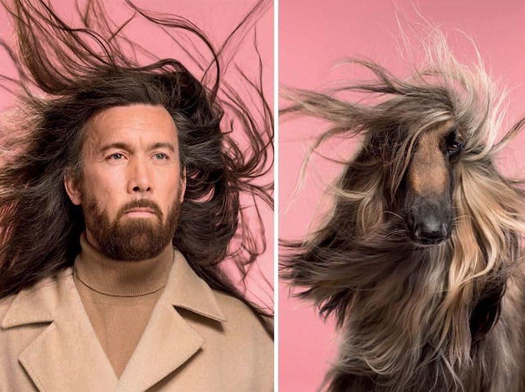 Potret Lucu Ekspresi Manusia dan Anjing yang Punya Kemiripan