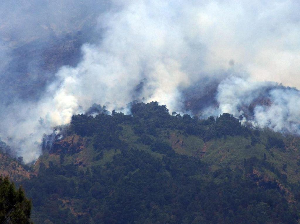 Kawasan Hutan Gunung Sumbing Terbakar