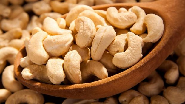 ilustrasi Kacang Mete