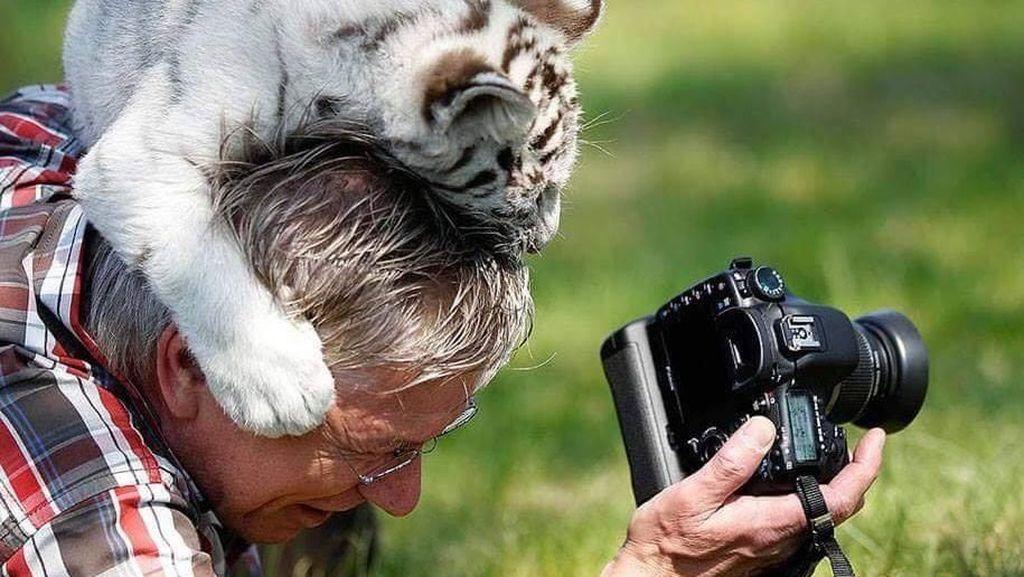 Foto-foto Lucu Saat Fotografer Satwa Liar Diganggu Hewan