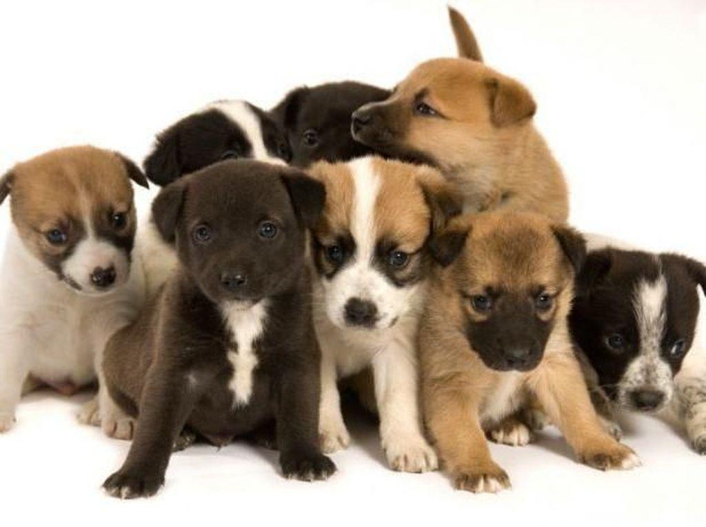Pemerintah Vietnam Himbau Warganya Berhenti Makan Daging Anjing