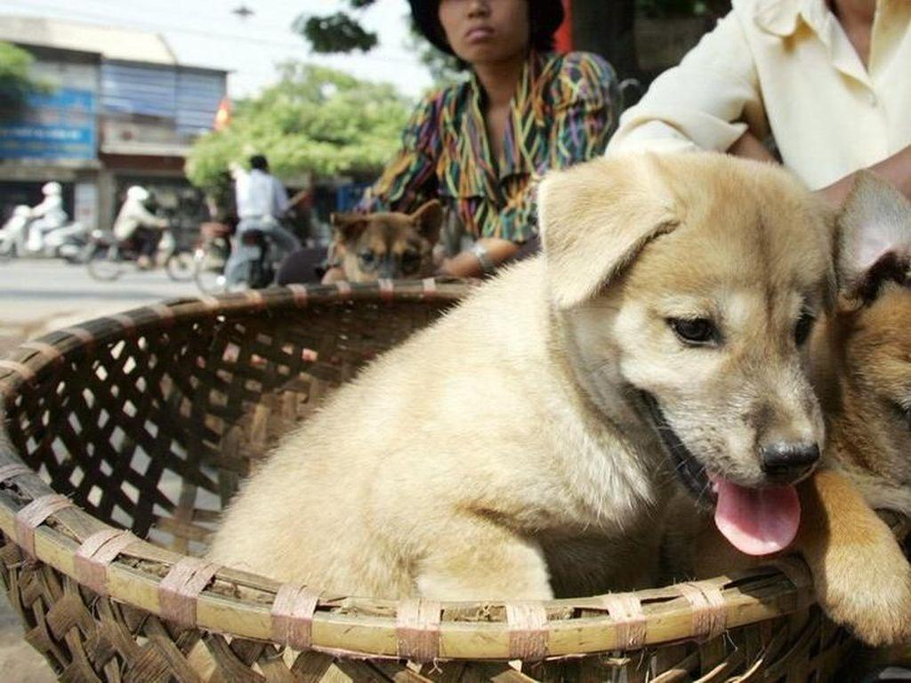 Pertama Kali! Desa Adat di Bali Bikin Aturan Larang Makan Anjing