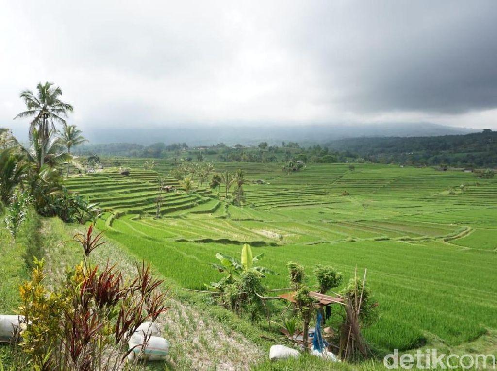 Penjelasan Polri soal Penertiban Retribusi Parkir Wisata di Bali