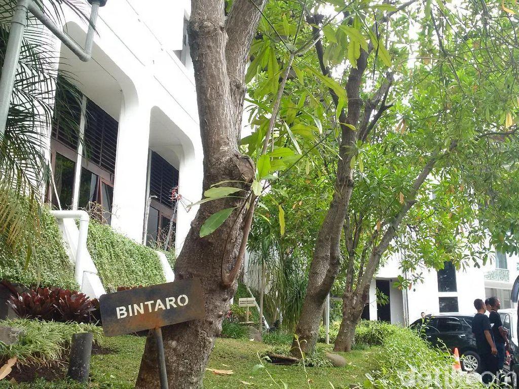 Awas! Ada Pohon Beracun di Kantor Ridwan Kamil