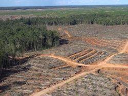 Polemik Investigasi Perusahaan Korsel Dituding Bakar Hutan Papua