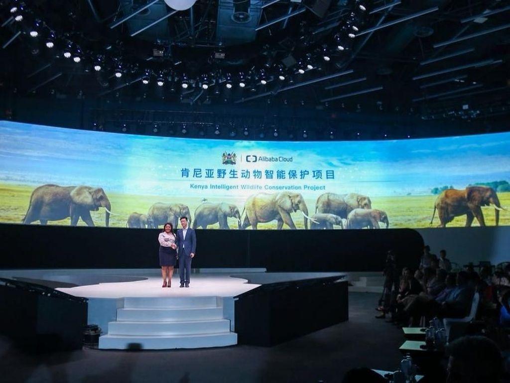 Teknologi Canggih Lindungi Gajah Adopsi Jack Ma