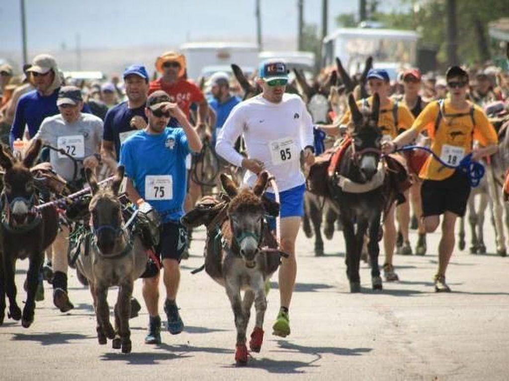 Coba Maraton Unik di Colorado, Lari Berdua Bareng Keledai