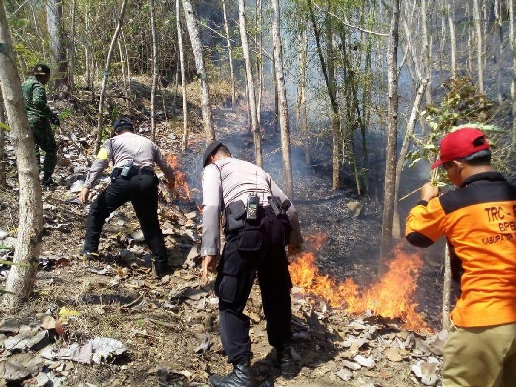 Tujuh Hektare Hutan di Trenggalek Ludes Terbakar