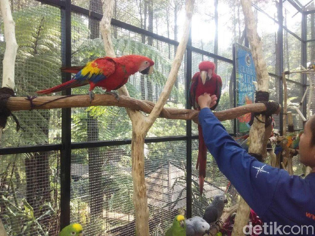 Ada Taman Burung dari Luar Negeri Lho di Lembang