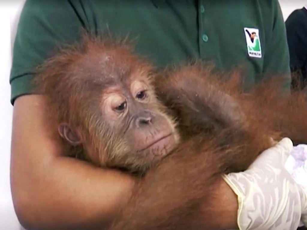 Malaysia Gagalkan Penyelundupan 400 Hewan Langka dari Indonesia