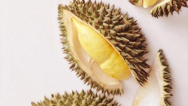 Ilustrasi durian