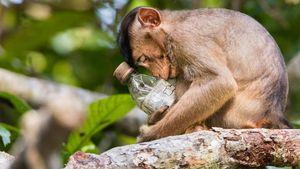 Deretan Jawara Foto Lingkungan Bikin Mengelus Dada