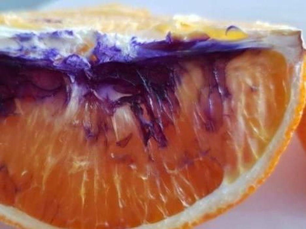 Apa yang Menyebabkan Jeruk Ini Berubah Ungu?