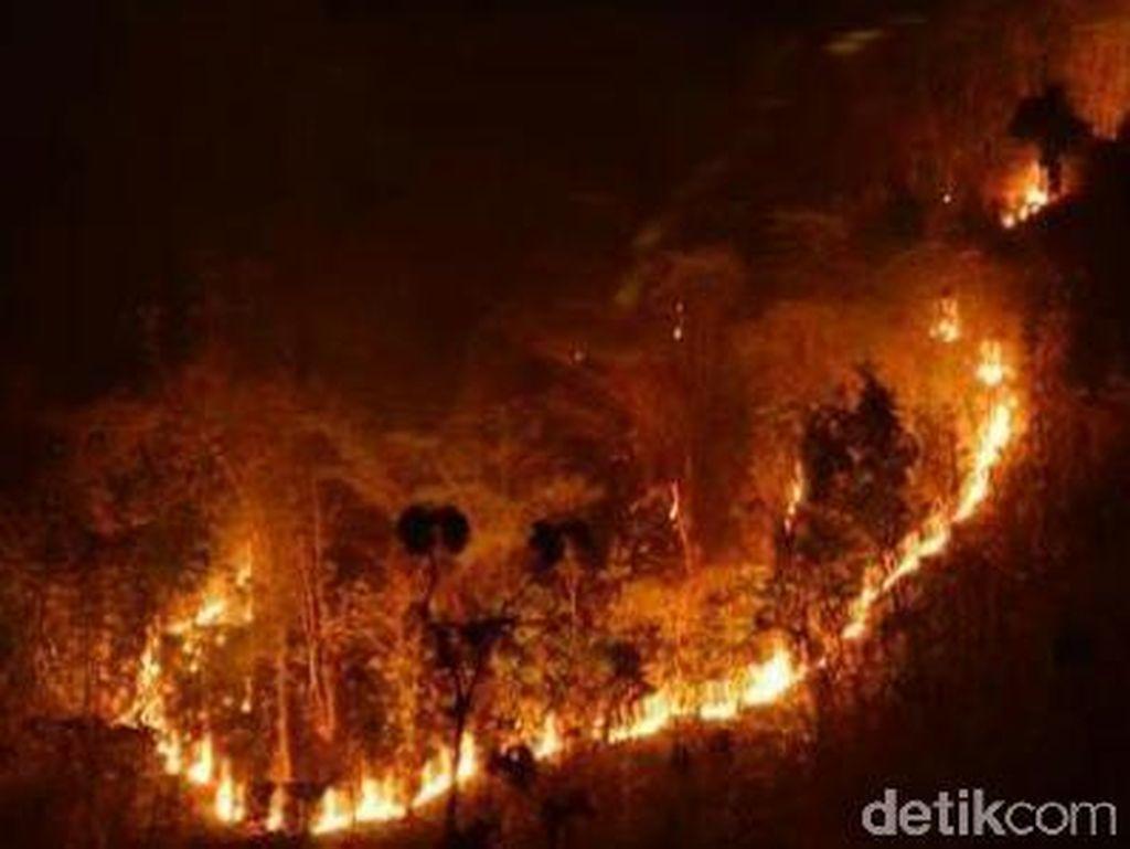Hutan di Lereng Pegunungan Argopuro Terbakar