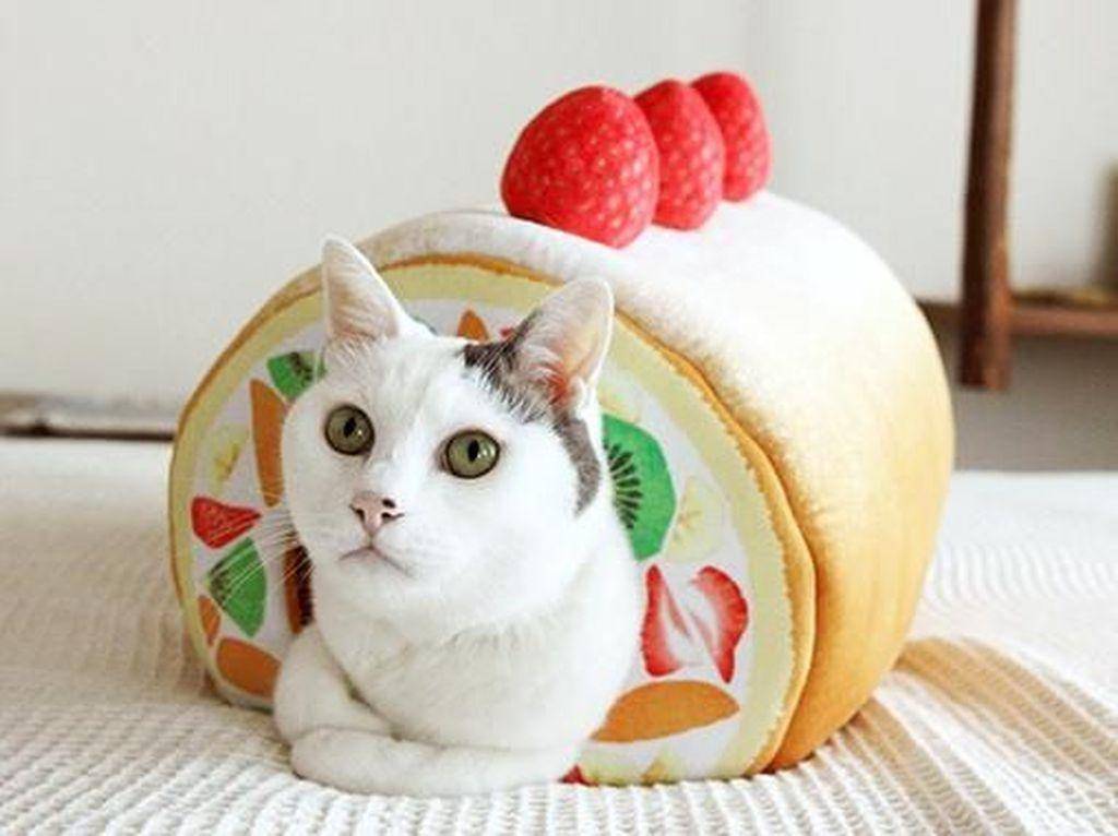 Gemas! Bantal Kucing Ini Bentuknya Roll Cake dan Pie yang Bikin Ngiler