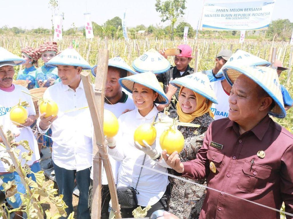 Rini Janji Jadikan Desa di Lamongan Kawasan Budidaya Melon