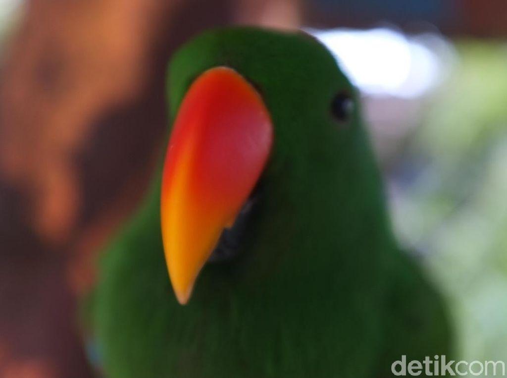 Flora dan Fauna Khas Indonesia Bagian Timur, Kamu Tahu Nggak Ya?