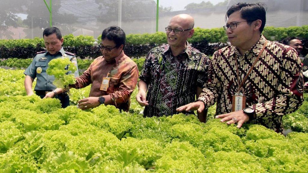 Rumah Hijau Hidroponik untuk Pensiunan TNI