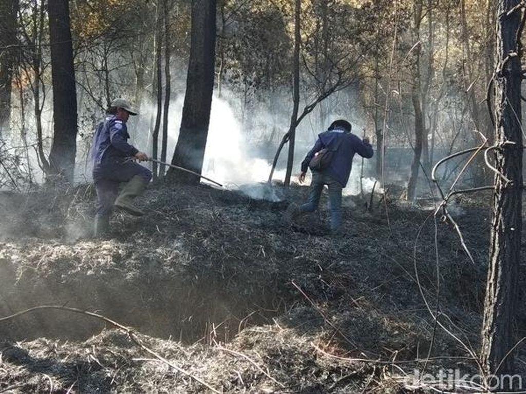 Hutan Pinus Dekat Candi Gedong Songo Terbakar