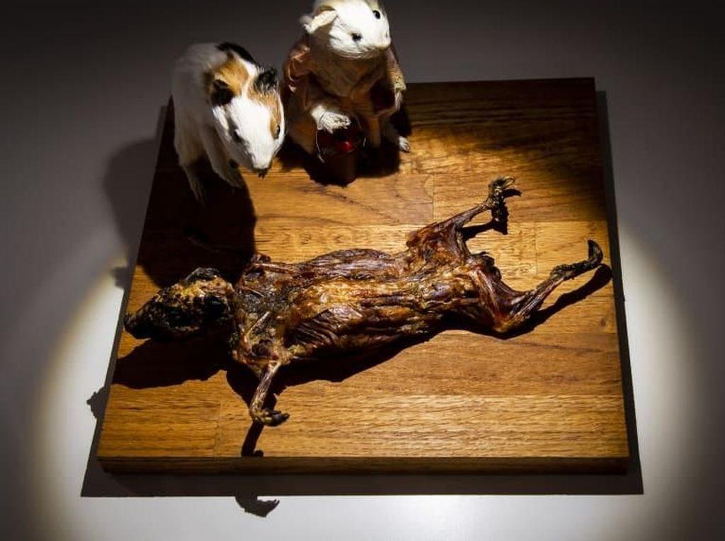 Museum Makanan Menjijikkan dari Seluruh Dunia Akan Segera Dibuka