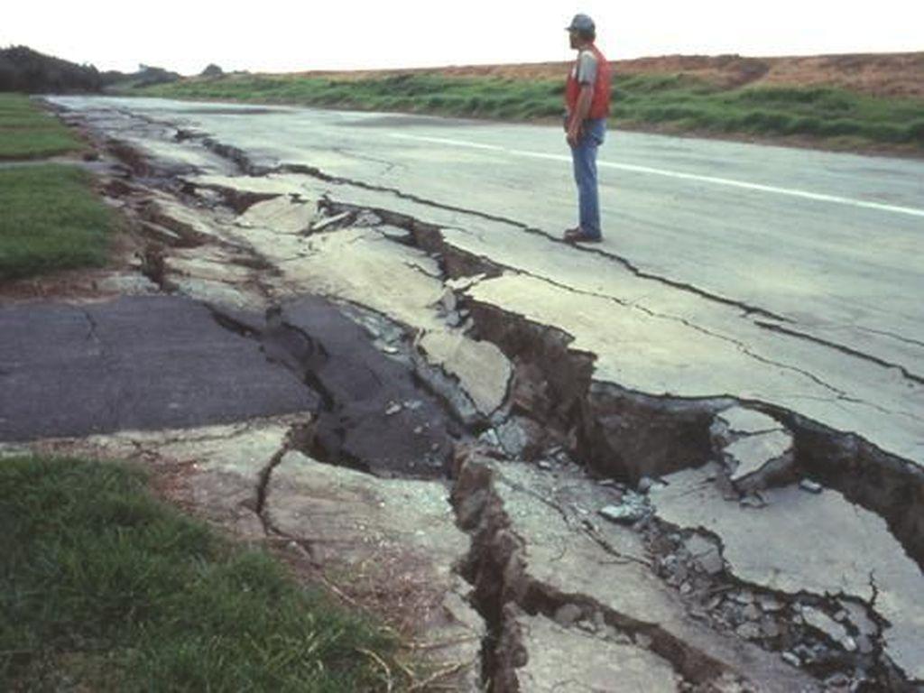 Rincian Data Ternak dan Pertanian yang Luluh Lantak Akibat Gempa Palu