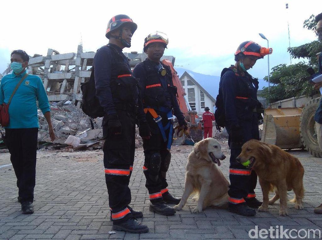 Anjing Pelacak Temukan Titik Korban Tertimbun di Hotel Roa Roa Palu