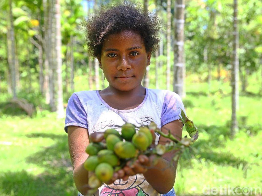 Menyirih Pinang Ala Papua, Sehat atau Berbahaya?