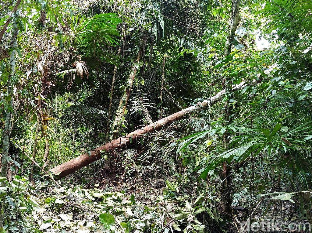 Sensasi Nyeker di Hutan Tapal Batas, Dipandu Agung Berkaki Empat