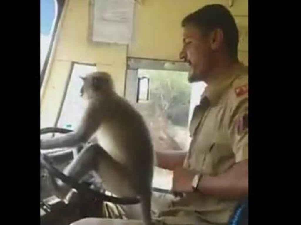 Viral Video Monyet Nyetir Bus Penumpang