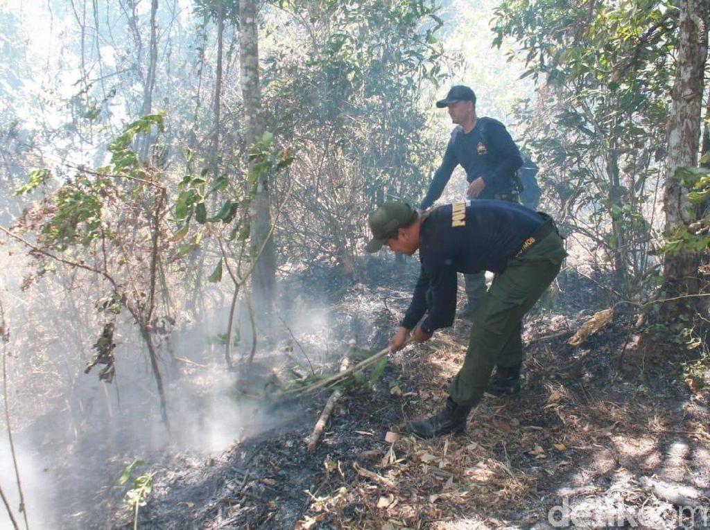 Terbakar Lagi, Petugas Gabungan Padamkan Hutan di Lereng Argopuro