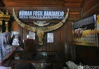 Rumah Fosil Banjarejo (Akrom Hazami/detikTravel)