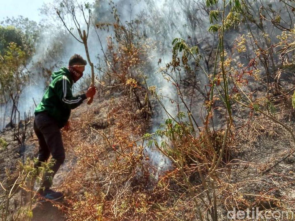 12 Hektare Hutan di Gunung Pundak Mojokerto Terbakar