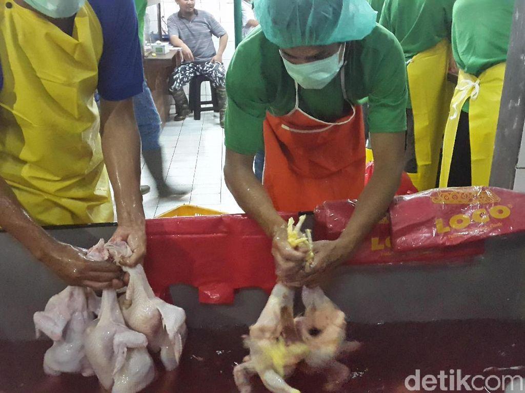 Libur Panjang Akhir Tahun, Harga Ayam Naik Jadi Rp 43.000/Ekor