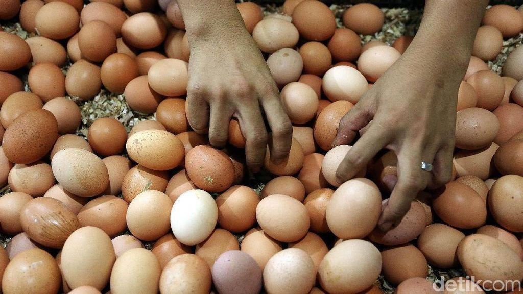 Harga Telur Ayam Naik