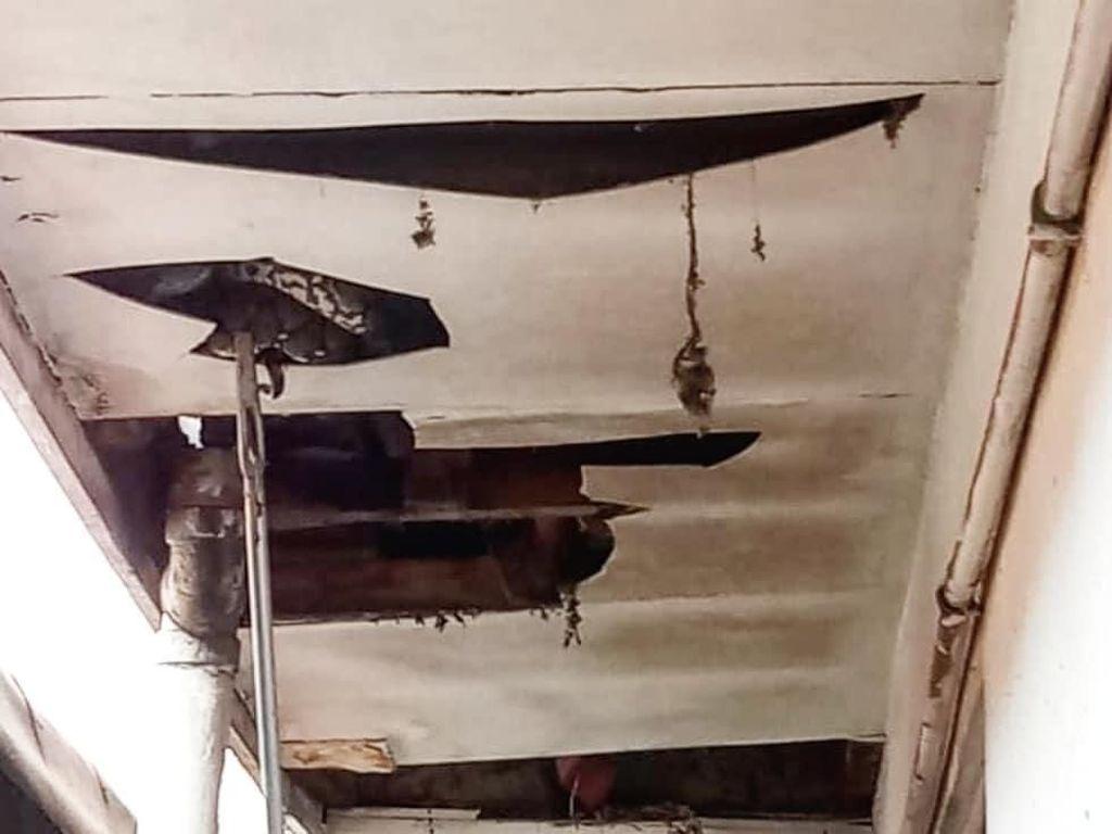 Bikin Kaget! Ular Sanca Nongol di Plafon Rumah Warga Kebayoran Baru