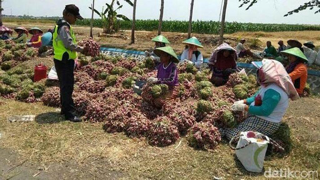 Polisi Borong Bawang Petani di Brebes, Masing-masing 2 Kg