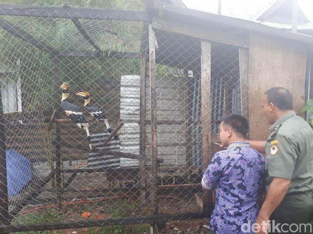 BKSDA Aceh Sita 3 Burung Rangkong dan 2 Kukang dari Warga